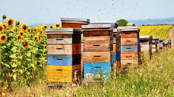 Sava George, Secretar Coordonator ALDE Buzau, fost Secretar General Adjunct la Ministerul Agriculturii: Incepand de maine se pot depune documentele pentru minimis la albine