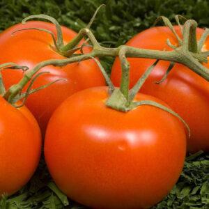 programul tomata